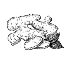 Ginger root vector hand drawn illustration.  Root and sliced pie