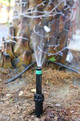 Watering in garden for tree