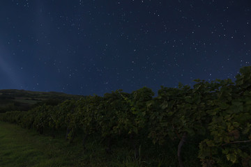 Night vineyard background. Night starry sky. Night sky with stars
