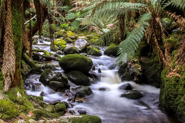 Stream flowing through lush rainforest, St Columba Falls, Tasmania, Australia