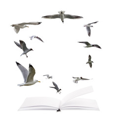 open blank book and flying seagulls  isolated on white