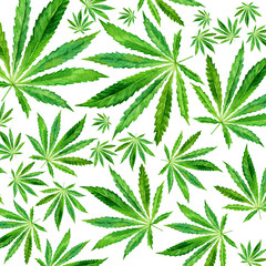 Crowd of Cannabis leaves on white background