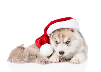 Sleeping scottish kitten and Siberian Husky puppy with santa hat. isolated on white background