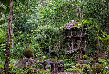 Tree wooden house in the jungle