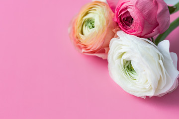 Spring flowers on pink background. Fresh flowers. Place for text.