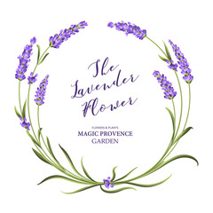 The lavender wreath with bouquet of flowers and text. Lavender blossom for marriage invitation. Frame with lavender flowers. Vector illustration.