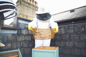 Two female beekeepers, inspecting hive
