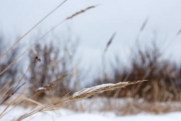 Переделанная песня под киркорова снег