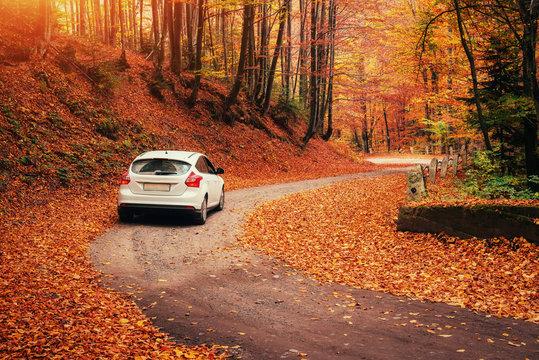 car on a forest path. Autumn Landscape. Ukraine Europe