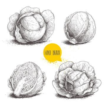 Hand drawn sketch style set of cabbages. Cabbage with leafs. Organic fresh food vector illustration isolated on white background.
