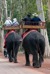 Elephant trekking. Cambodia Angkor Wat