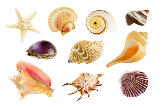 Collection of ten different seashells, isolated on pure white background.
