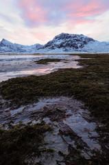 Brughiera ghiacciata alle isole Lofoten, Norvegia