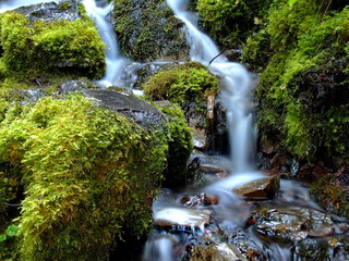 Peaceful Proxy Falls flows through moss covered rocks on a fall day.