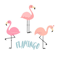 Vector image of a flamingo