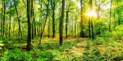 Wald im Sommer bei strahlendem Sonnenschein