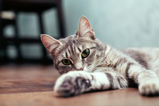 Grey young cat sitting on the floor. The concept of pets.