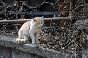 Battered dirty homeless cat sitting on the street in high quality