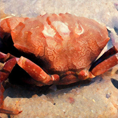 Big red crab from the back on the beach sand. Digital illustration in painting style