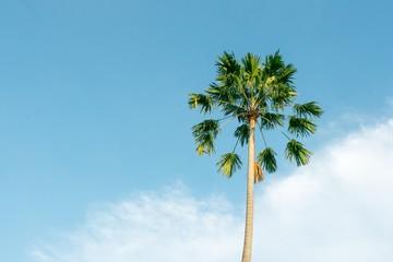 Palm tree on blue sky, Vintage style