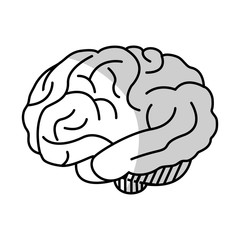 Human brain organ icon over white background. vector illustration