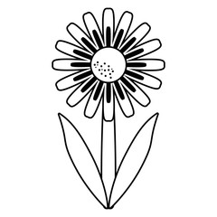 daisy floral garden spring thin line vector illustration eps 10