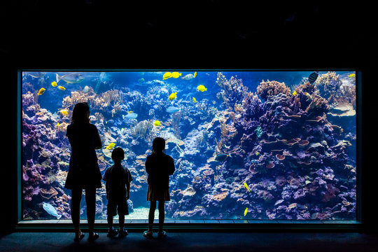 Silhouette of mother and children enjoying the tropical fish tank