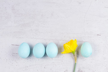 Row of blue eggs with yellow daffodil on aged wooden desktop