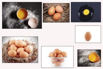 коллаж фотографии яйца разные на белом фоне