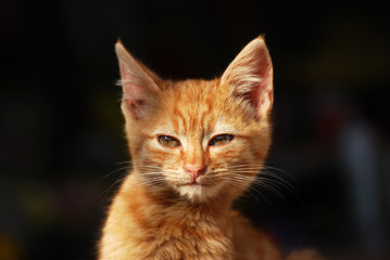 Portrait of a little yellow-orange newborn kitten