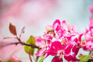 beautiful garden spring flowers
