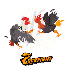 Cockfighting. character design come with typographic for infographic or header design - vector