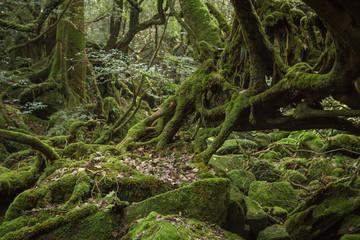 Door stickers 'Mononokenomori', moss forest in Shiratani Unsuikyo, Yakushima Island, World Heritage Site in Japan
