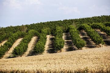 paysage verger et champs