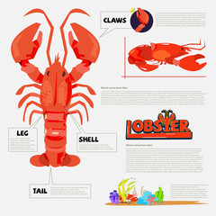 Lobster - vector illustration