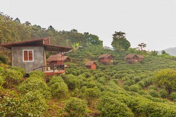Hut in tea plantation