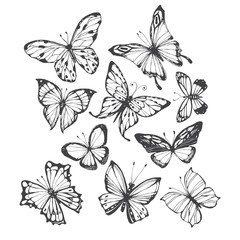 Butterflies. Vector hand-drawn illustration on a white background. Collection of isolated elements for design.