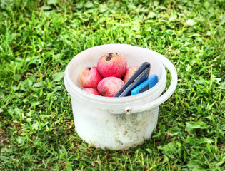 Apples and mobile phones in bucket