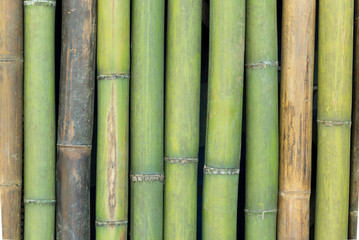 Bamboo fence background.