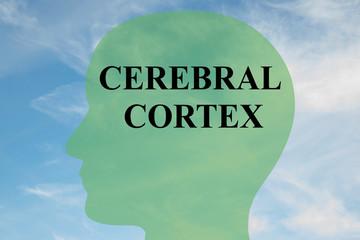 Cerebral Cortex concept