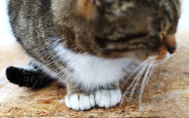 cat paws, Adorable cat sleeping