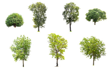 Collection of trees isolated on white background.