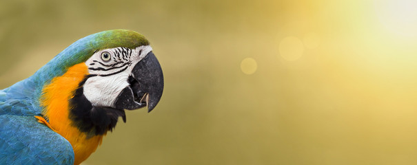 Foto op Plexiglas Papegaai Website banner of a colorful funny parrot