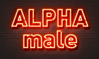 Alpha male neon sign on brick wall background.