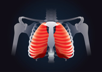 Red Lung in human rib cage on black. This illustration about human respiratory System.