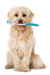 Hund mit Zahnbürste