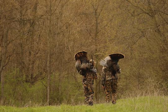 Two hunters carrying dead turkeys