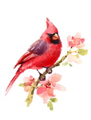 Cardinal Red Bird On a Branch with Flowers Watercolor Hand Drawn Summer Illustration isolated on white background