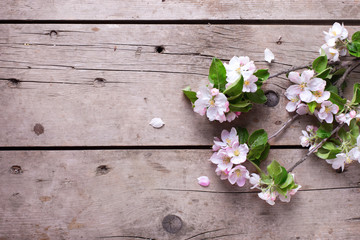 Spring apple tree flowers on  aged wooden background.