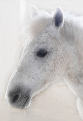 Horse closeup. The horse in the stable. White horse.